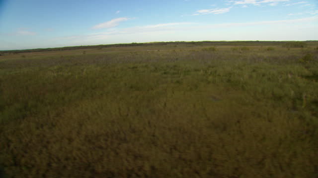 a waterway winds through swampland in the everglades. - everglades national park stock videos & royalty-free footage
