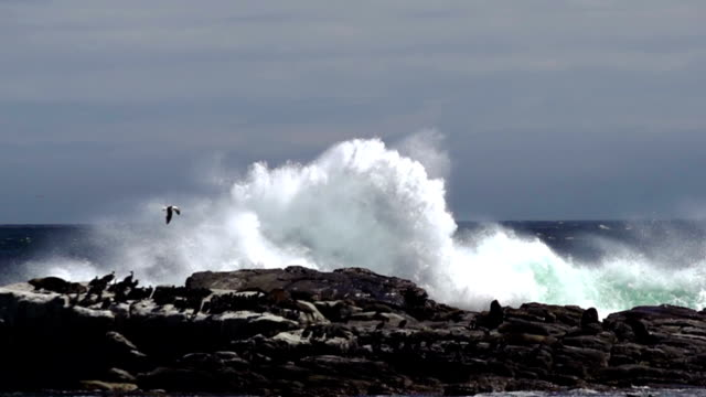 stockvideo's en b-roll-footage met wave crashes against rock - groot