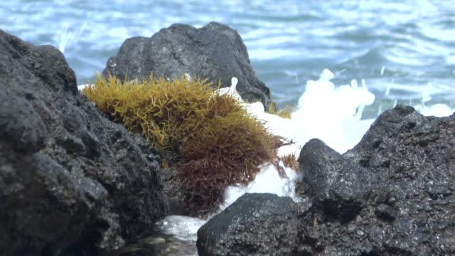 cu wave crashing onto lichen-covered rock in ocean - 地衣類点の映像素材/bロール