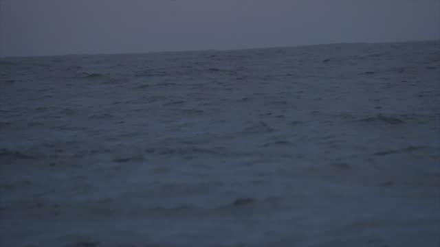 wave-muster: das offene meer und möwen - möwe stock-videos und b-roll-filmmaterial
