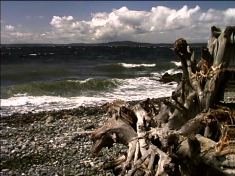 waves and driftwood on a rocky beach - artbeats stock videos & royalty-free footage