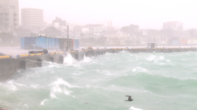 vidéos et rushes de waves and spray soak harbor waterfront in miyakojima, japan as typhoon chan-hom hits the island on 10th july 2015. - organisme aquatique