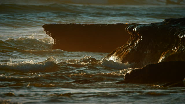 Waves break against a reef wall in the evening light showcasing the intricate beauty of Earth's oceans.