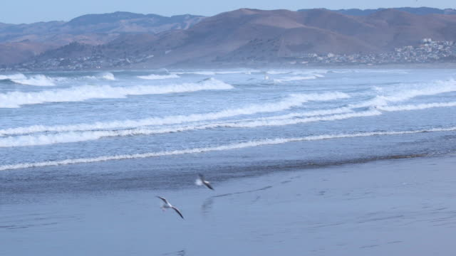 waves breaking on beach at Morro Bay, gulls flying and landing