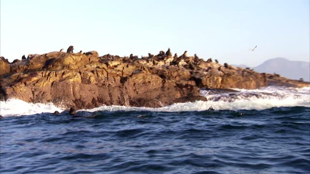 waves crash against a rugged shoreline. - アシカ点の映像素材/bロール