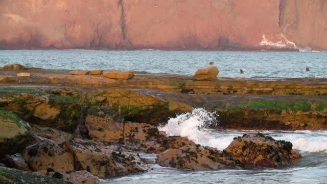 Waves crash against mossy coastal shoreline