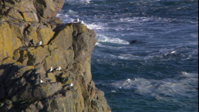 waves crash into a rocky english coastline where seagulls perch. - channel islands england stock videos & royalty-free footage