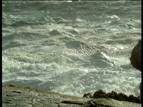 "vidéos et rushes de waves crash on rocky coast towards camera, falkland islands - ""bbc natural history"""