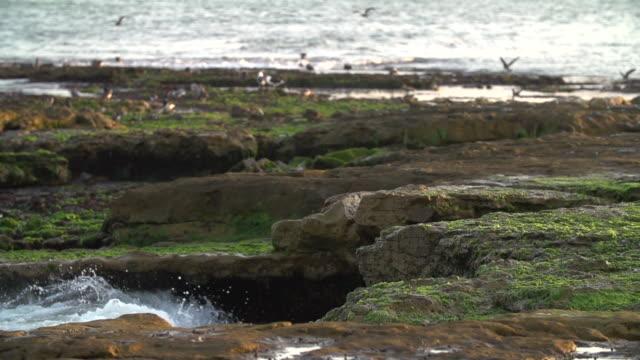 Waves crash on rocky moss shoreline