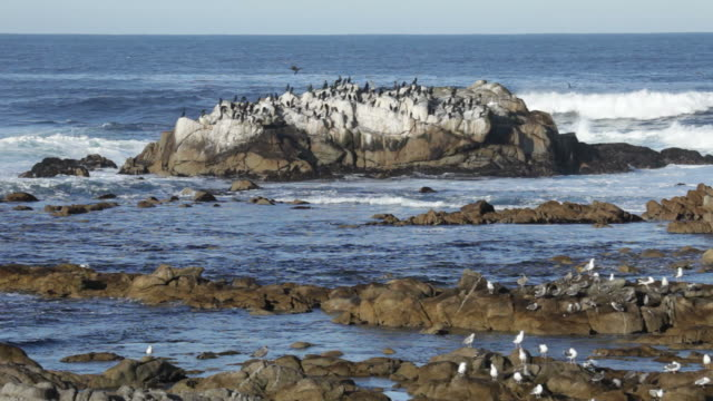 Waves crash rocky Monterey Bay coast island shore birds California