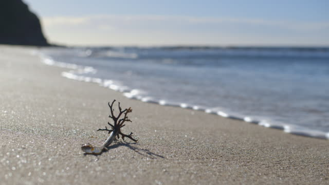 waves gently lap at a piece of organic sea debris on australia's eastern coast. - riva dell'acqua video stock e b–roll
