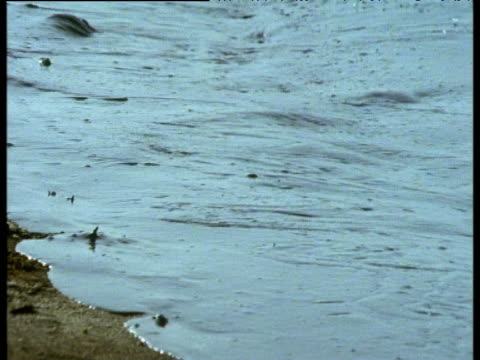 stockvideo's en b-roll-footage met waves lap on shore, thick with black oil slick, saudi arabia, 1991 - perzische golf