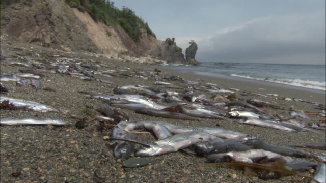 waves lap onto a beach where piles of dead fish lie. - death stock videos & royalty-free footage