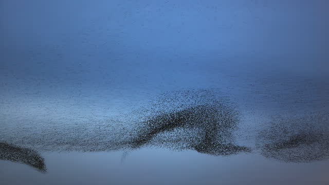 waves of birds - large stock videos & royalty-free footage