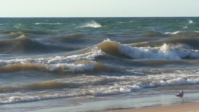 wellen am strand mit möwe - audio verfügbar stock-videos und b-roll-filmmaterial