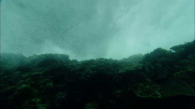 waves roll and churn above corals near heron island, australia. - tide stock videos & royalty-free footage