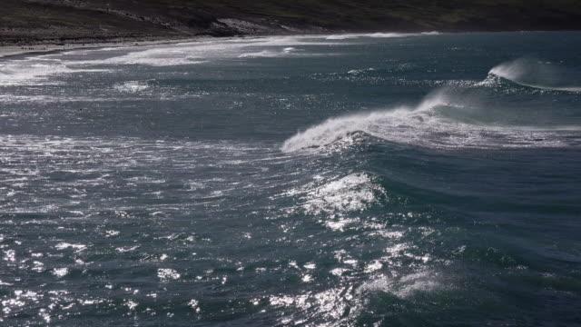 vídeos de stock e filmes b-roll de waves rolling onto beach at the neck, saunders island, falkland islands - ilhas malvinas
