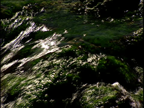 waves splash over algae on large rocks. - alge stock-videos und b-roll-filmmaterial