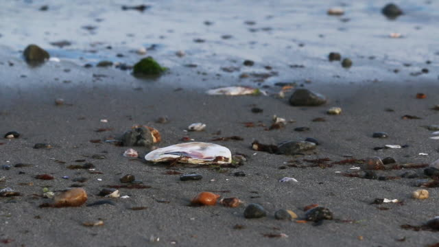 waves wash into seashells on the beach - animal shell stock videos & royalty-free footage