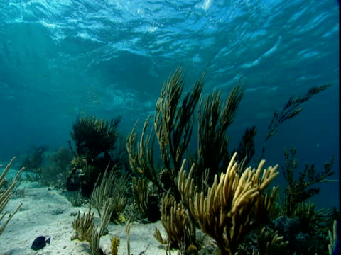 waves wash over corals on a sandy, shallow seabed. - shallow stock videos & royalty-free footage