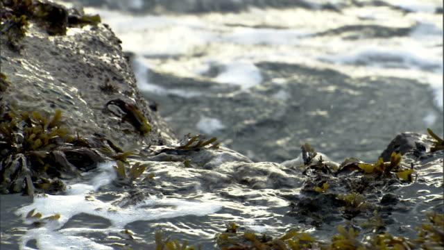waves wash over seaweed-covered rocks. - algae stock videos & royalty-free footage