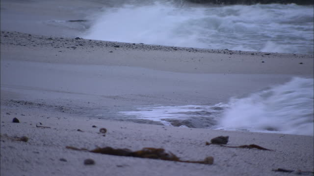 waves wash up on boulders beach. - boulder beach western cape province stock videos and b-roll footage