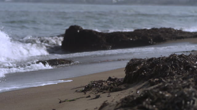 slo mo waves washing over shore and seaweed, spain - seegras material stock-videos und b-roll-filmmaterial