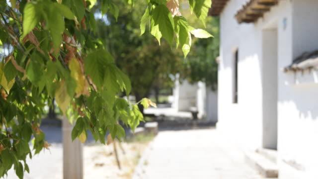 waving branches in the sun in front of escula san ignacio community college in calera de tango chile calera de tango shows the great jesuit mission... - jesuit stock videos and b-roll footage