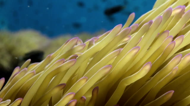 waving sea anemone tentacles - sea anemone stock videos and b-roll footage