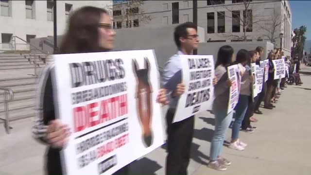 KTLA Waving signs proclaiming Horses Are Raced to Their Grave PETA supporters rally outside District Attorney Jackie Lacey's office to demand that...