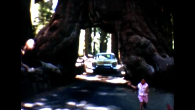 1955 wawona tree - giant sequoia stock videos and b-roll footage