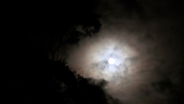 Waxing Moon Behind Eucalyptus Tree with Dark Clouds Moving