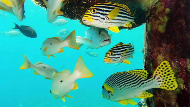 we always stick together - sweetlips stock videos & royalty-free footage