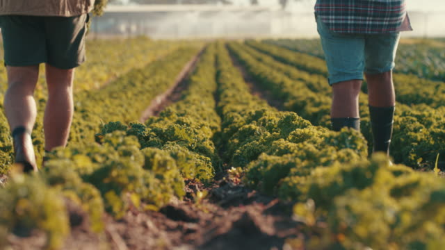 vi kunde gå vår gård hela dagen - vuxen bildbanksvideor och videomaterial från bakom kulisserna
