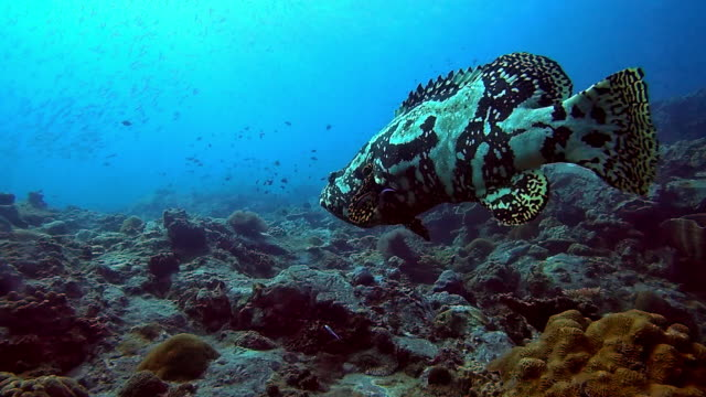 we dive for life to escape us - invertebrate stock videos & royalty-free footage