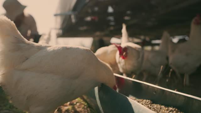 vídeos de stock, filmes e b-roll de nós os alimentamos apenas os melhores. - white