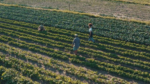 當我們一起工作時,我們會做得更多 - 農場工人 個影片檔及 b 捲影像