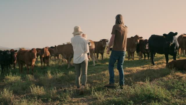 vidéos et rushes de nous aimons que nous obtenons d'élever une famille sur une ferme - vache