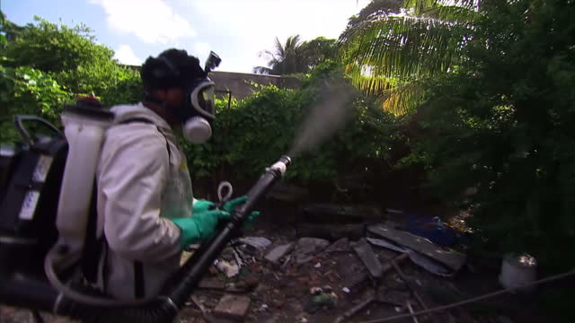 vidéos et rushes de we start with a warning from scientists at the epicentre of the devastating zika virus. experts in brazil have told us they now suspect the disease... - virus zika