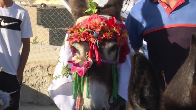 wearing a crown of flowers cleopatra the donkey delighted villagers in central morocco by bucking the trend to clinch top prize in a beauty pagean in... - cleopatra stock videos & royalty-free footage