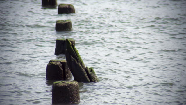 weathered posts in the water as the waves rise and fall - weathered stock videos and b-roll footage