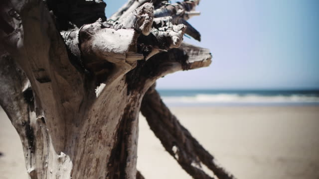 stockvideo's en b-roll-footage met weathered wood on beach with sea in background - drijfhout