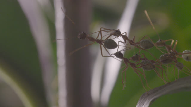 World's Best Ant Bridge Stock Video Clips and Footage