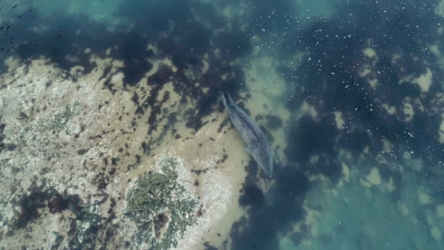 weddel seal swimming - antarctic peninsula stock videos & royalty-free footage