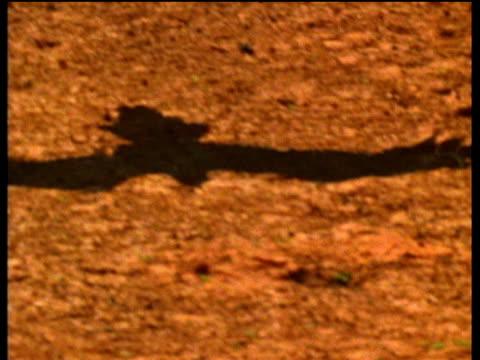 vídeos de stock, filmes e b-roll de wedge tail eagle flying over red sand, casting black shadow, australia - clima árido