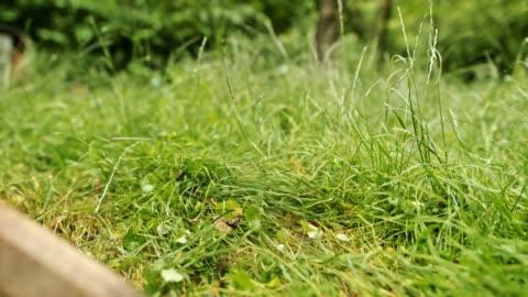 vídeos y material grabado en eventos de stock de herramienta de corte cu weed cortando hierba y maleza - work tool