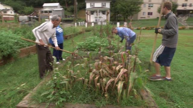 weeding and pulling harvest from community garden in appalachia - gemeinschaftsgarten stock-videos und b-roll-filmmaterial