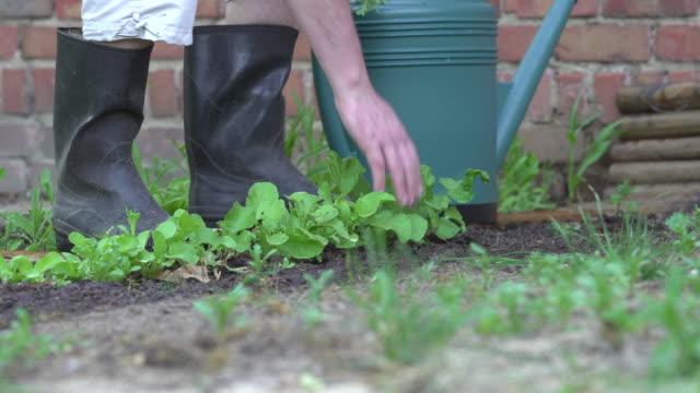 weeding in vegetable garden. - crucifers stock videos & royalty-free footage