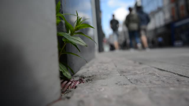 weeds appearing on grafton street during lockdown - ruined stock videos & royalty-free footage
