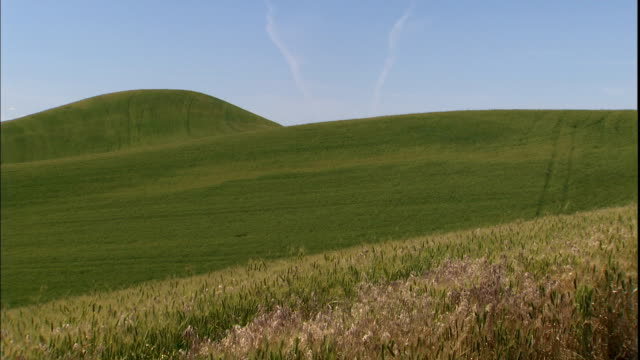 weeds grow in a meadow near rolling hills. - grass area stock videos & royalty-free footage